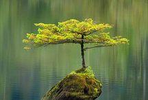 Trees / by Corrina