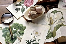 Botanical Art / by fang ling