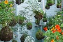 garden ideas / by J Westen