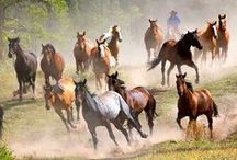 all about HORSES / this and that about horses... / by Kate Arnold