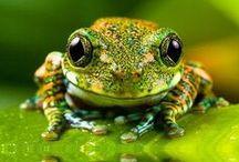 Frog / by Koji Yoshida