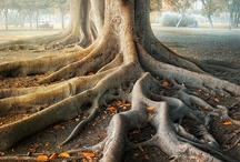 Roots / by Trees