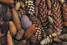 Pinecones / by Trees