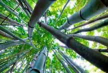 Bamboo / by Trees