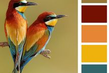 Color! / by Dorothy Thomas
