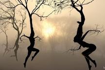 Enchanted Trees / by LaRonda Zupp