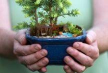 Miniature Gardens / by Sierra Magazine