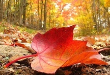 autumn / by Jasmine Magana
