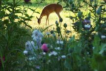 Jardins / by Rosangela Rey
