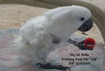 Birds / Wild and domesticated birds only  / by HorseSisters Equine Assisted Therapy & Rescue
