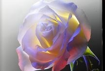 ♥.•´¯`•In Bloom•´¯`•.♥  /   / by Lisa Balavage