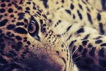Animals / by Laura Lambert