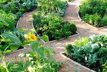 "Veggie Garden / ""To dream a garden and then to plant it is an act of independence and even defiance to the greater world.""  ― Stanley Crawford / by beverly frey"