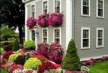Gardens / Love gardening?  You might enjoy my boards for; Container Gardening, Window Boxes, Veggie Garden, Garden Gates, Patios, Hosta, Roses, plus others for your pinning pleasure. / by Patricia Lauder