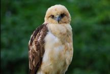 Birds and Wildlife at Holualoa / by Holualoa Inn
