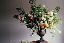 Floralia / by Charlotte Bentley