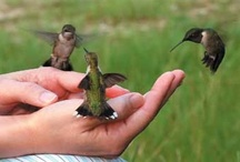 Hummingbirds / I Love Hummingbirds!!! / by SPN_Angel