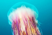Jellyfishes / Jellyfishes / by Doloreas Brradford