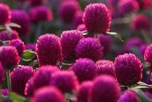 Garden / by Suzanne Bruening