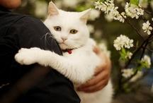 Pets, companions... / by Engin Gündüz