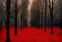 Landscapes / by Margaret Wozniak