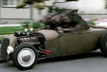 Rat Rods down low / by You