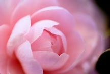 Fancy A Flower? / by Daniela