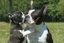 Cutest pets ever! / by Thumper Thumper
