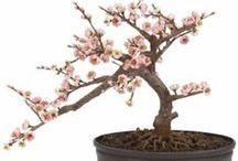 BONSAI / Bonsai tree and bonsai art / by Jacinth Barnett - Home Decor