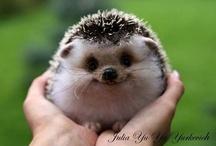Cute animals / by Sydney Walaski