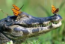 Crocs - my fascination  / by K. B.