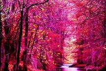 Beautiful world / by Rime Dadis