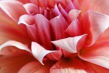 Flowers & Gardens / by Marjorie Souza