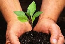 How Does Your Garden Grow? / by Just Energy