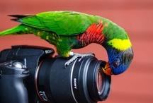 Birds / #birds #parrots #peacocks #wildbirds #waterbirds / by Mystikfish