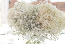 WEDDING / by Naiya Hutchins