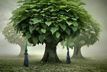 ○ Miraculous Tree! ○ / by Natascha van den Bosch