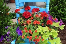 Container Gardens / by Tracy Hulett