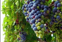 Wineries / by Linda Courtemanche