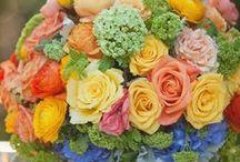 Color Inspiration / by Celia Rachel