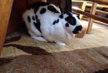 Bunnies / by Judy Wentz