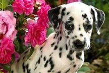 doggies  / by Brittany Meier