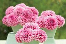 Pretty Flowers / by Brittany Meier