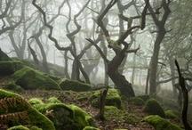 Fantasyland / by Felix Huck