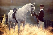 Equestrian / by Olivia C