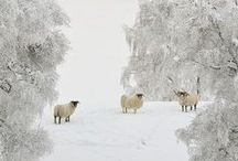 Winter Wonderland / by Wendy de Rooy