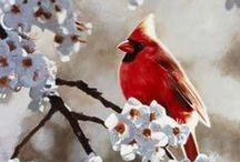 Red Cardinal and a Desert Cardinal / by Teresa Franco