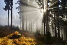 Český les / Czech woods and forests / by OREA HOTELS
