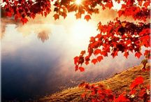 Autumn / Colours of Autumn / by Geoff