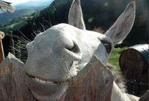 Burros & Donkeys .. love em / by Lynne Wilcox